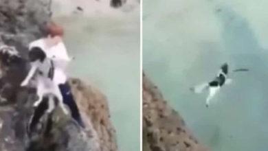 Photo of Causa indignación video de joven arrojando a un perro por un acantilado