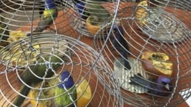 PROFEPA ha decomisado cerca de 11 mil productos de vida silvestre en 2019
