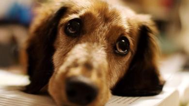 Photo of A través del agua, tu perro podría contagiarte de esta enfermedad