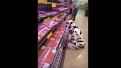 VIDEO: Vegana se viste de vaca y llora frente a la sección de carnes de un supermercado