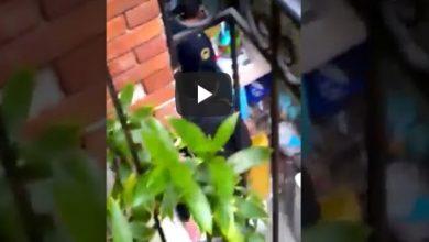 Video: Policías irrumpen en una vecindad; hay tres heridos y un perrito muerto