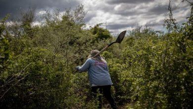 Asesinan en Michoacán activista que se dedicaba a buscar desaparecidos