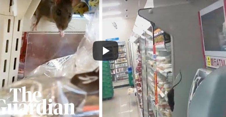 Video: Captan ratas en la comida de un supermercado