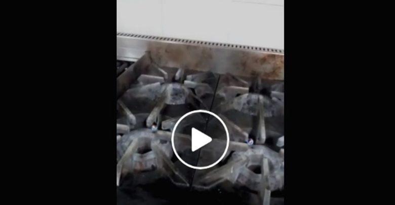 Video: Captan cucarachas en la cocina del IMSS de especialidades en Charo