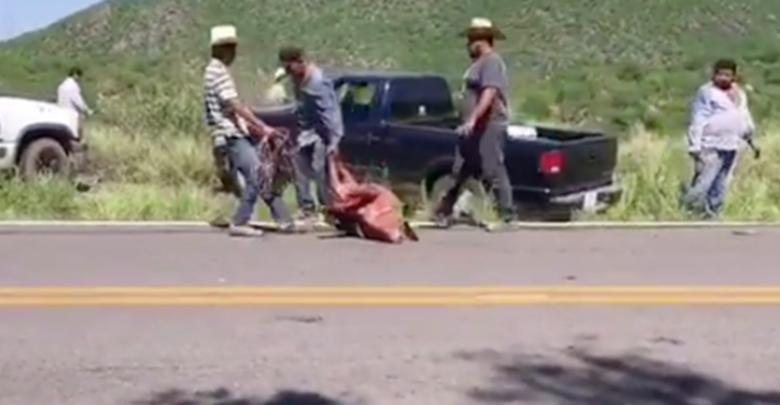 VIDEO: Vuelca tráiler con 150 cerdos y pobladores los roban