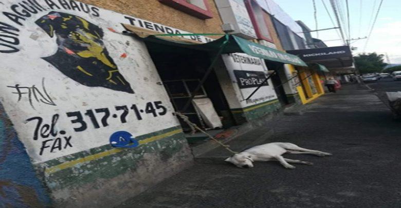 Denuncian veterinaria de Morelia por maltrato animal