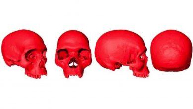 Photo of Reconstruyen virtualmente cráneo del ancestro del Homo Sapiens