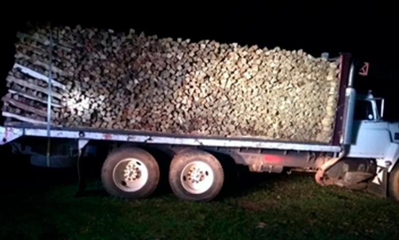 Decomisan Profepa y Guardia Nacional cargamento de madera en la Reserva de la Monarca
