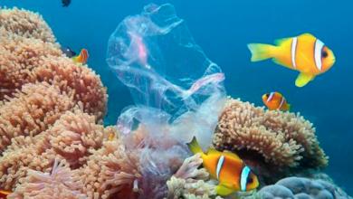 Photo of En las costas de Hawái, la cantidad de plástico es 7 veces mayor al número de peces