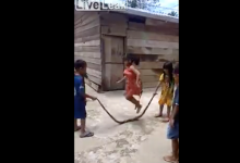 """Photo of Niños juegan a """"saltar la cuerda"""" con serpiente muerte"""
