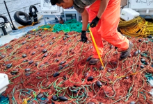 Photo of Recupera Profepa 16 redes totoaberas en el Alto Golfo de California
