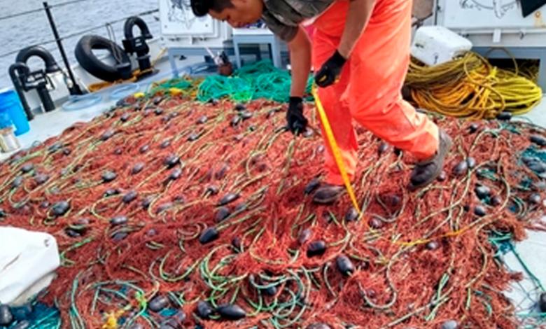 Recupera Profepa 16 redes totoaberas en el Alto Golfo de California