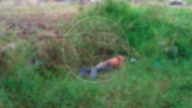 Photo of Arrojan un muerto atrás de la estación de bomberos de Jiquilpan