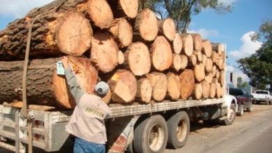 Photo of En Morelia, obtiene FGE vinculación a proceso contra presunto responsable de delito forestal