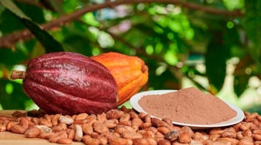 Chocolate: exquisito aroma y sabor de México para el mundo