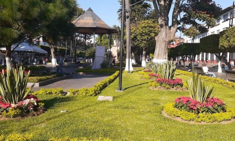 Inicia colocación de 6 mil plantas de Nochebuena y adornos navideños en Uruapan