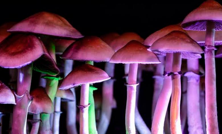 Componente de los hongos alucinógenos podría convertirse en medicamento contra la depresión