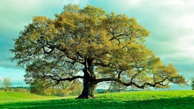 Photo of Genética podría ayudar a rescatar árboles del cambio climático