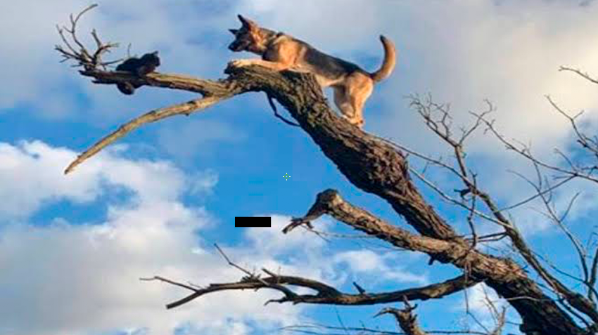 Perro corre tras gato y quedan atrapados en un árbol; bomberos los rescataron
