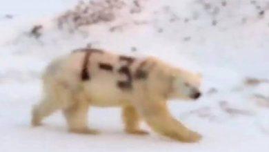 Photo of Indignación en redes por graffiti a oso polar