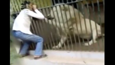 Photo of VIDEO: Cuidador de zoológico es atacado por un león