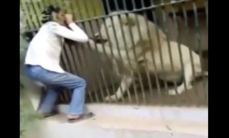 VIDEO: Cuidado de zoológico es atacado por un león