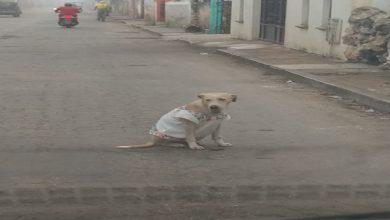 Photo of Artesanos visten a perrita con huipil para protegerla del frío y se hace viral