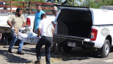 Photo of Abejas pican a un anciano y muere camino al hospital