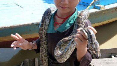 Photo of Coronavirus surgió de las serpientes