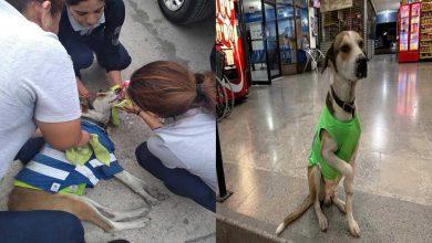 Photo of Envenenan a perrito que trabajaba en la terminal de autobuses