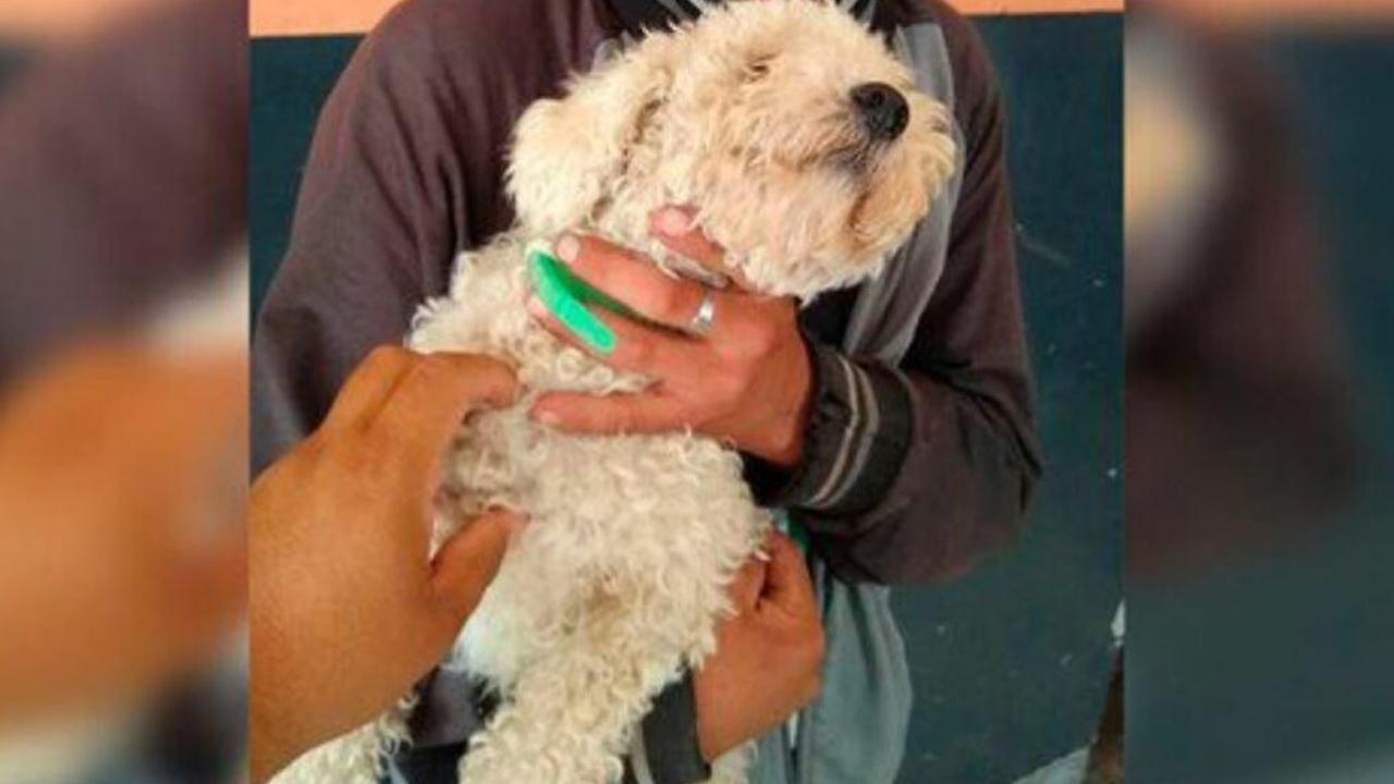 Joven roba un perro para regalárselo a su novia por San Valentín; fue detenido