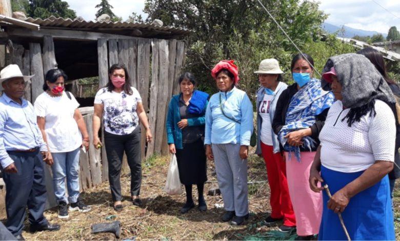 Incentivan el autoconsumo en localidades de zitácuaro con huertos de traspatio impulsados por María Chávez