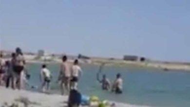 Photo of Turistas golpean a una foca hasta dejarla inconsciente.