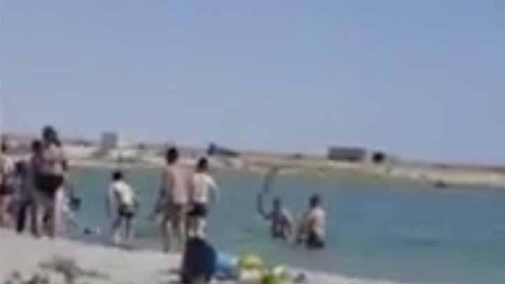 Turistas golpean a una foca hasta dejarla inconsciente.