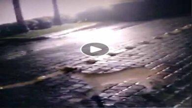 Photo of Circula video de un Puma recorriendo las calles de Morelia