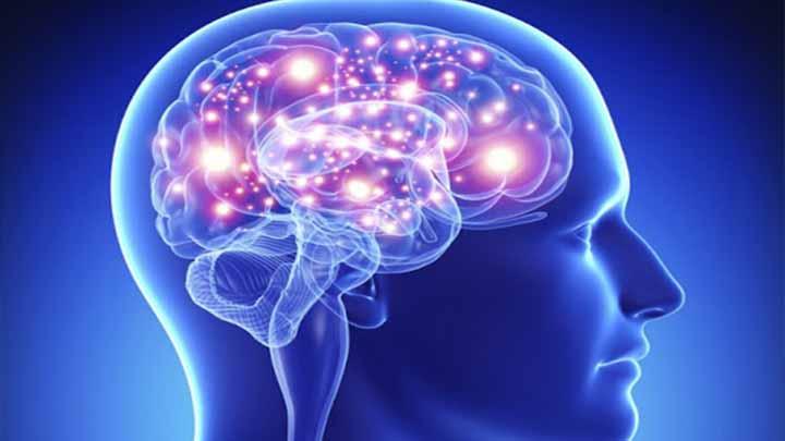 Estudio revela el cerebro humano es capaz de predecir el futuro inmediato