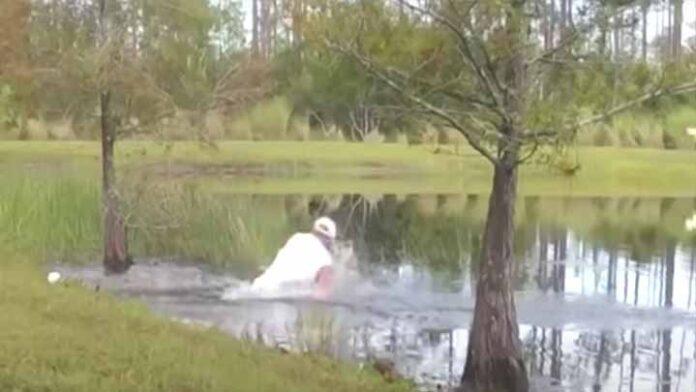 Hombre lucha con un caimán para salvar a su perrito de ser devorado