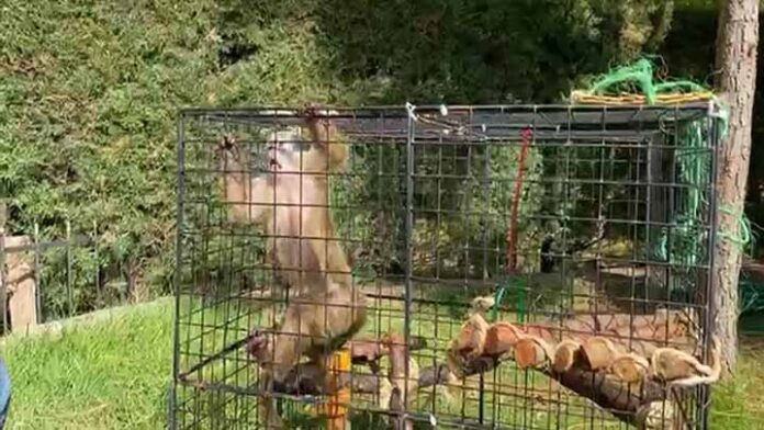 Nuevo integrante en el zoológico de Morelia, ¡Conócelo!