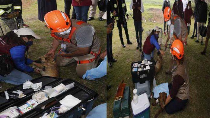 Rescatan a los dos perritos atrapados en el socavón de Puebla