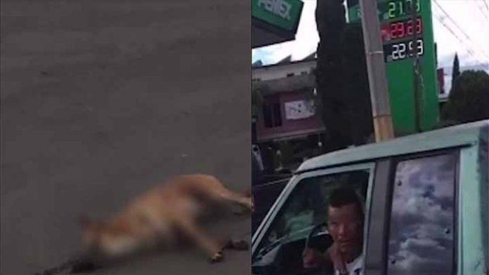 Denuncian a hombre arrastraba a un perrito amarrado a su camioneta