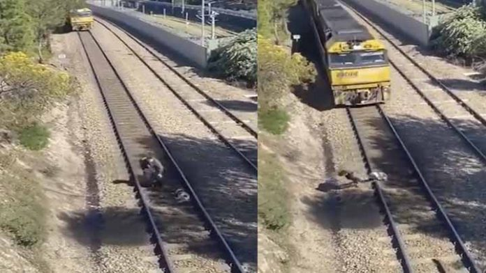 Hombre arriesga su vida para salvar a un perrito de la muerte